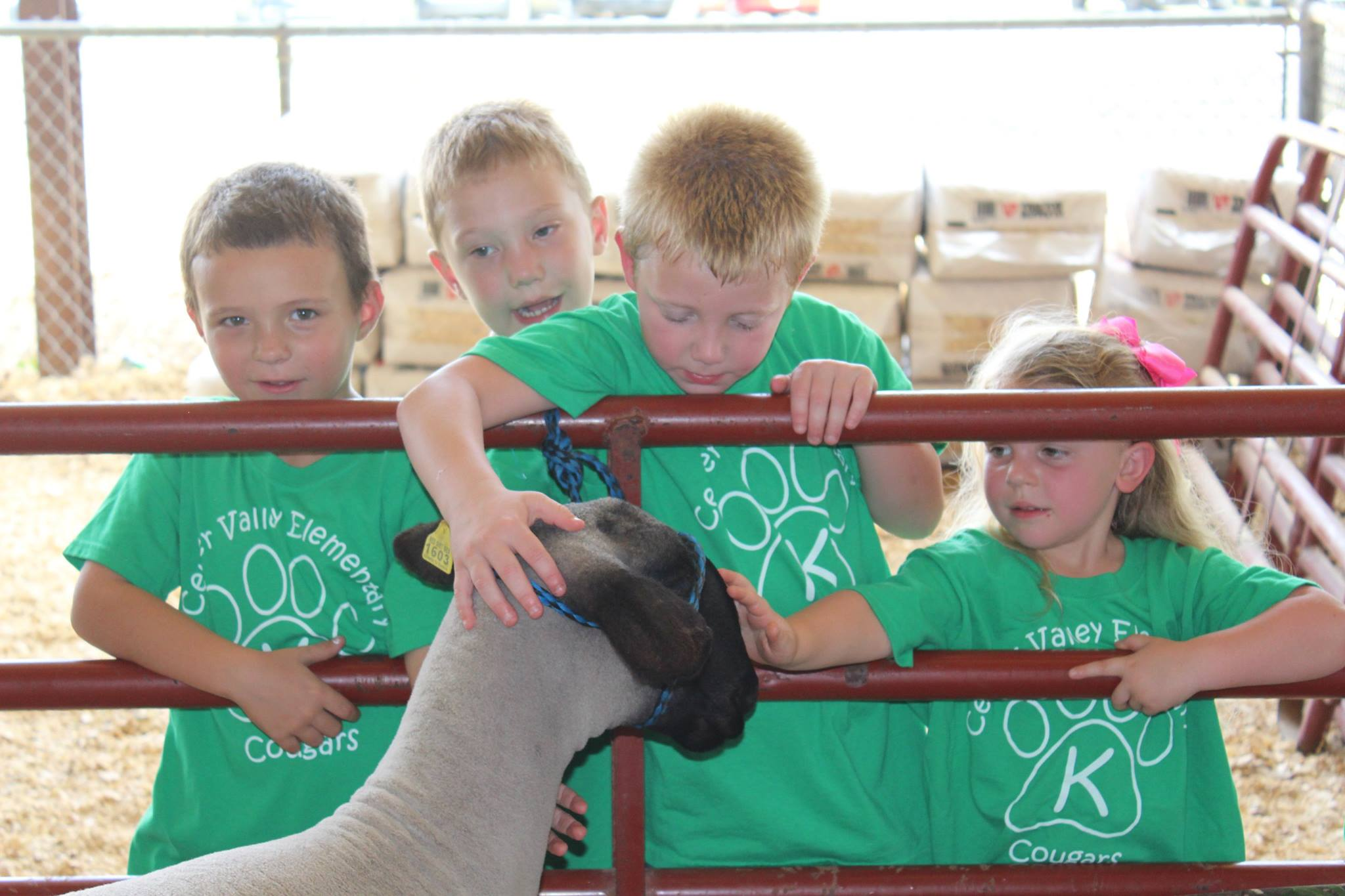 children petting sheep at fair