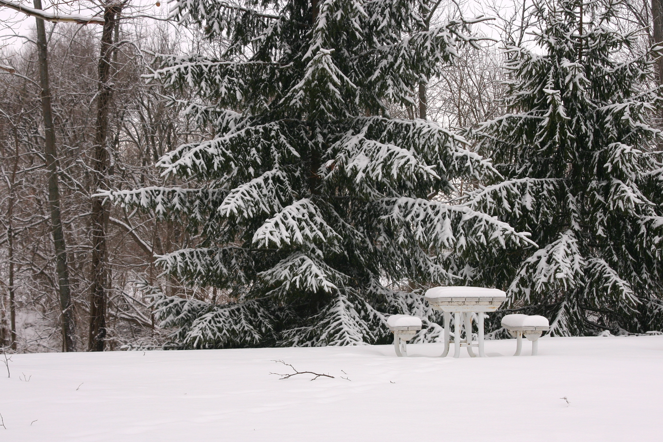 Snow blankets the tables at Friendship Gardens.