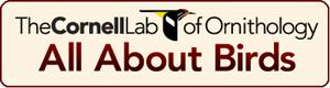 Cornell Lab or Ornithology Logo