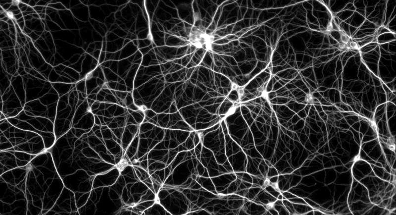 Image: Neuron Network