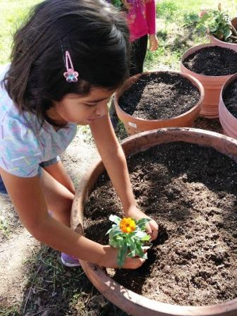 Little girl planting a flower